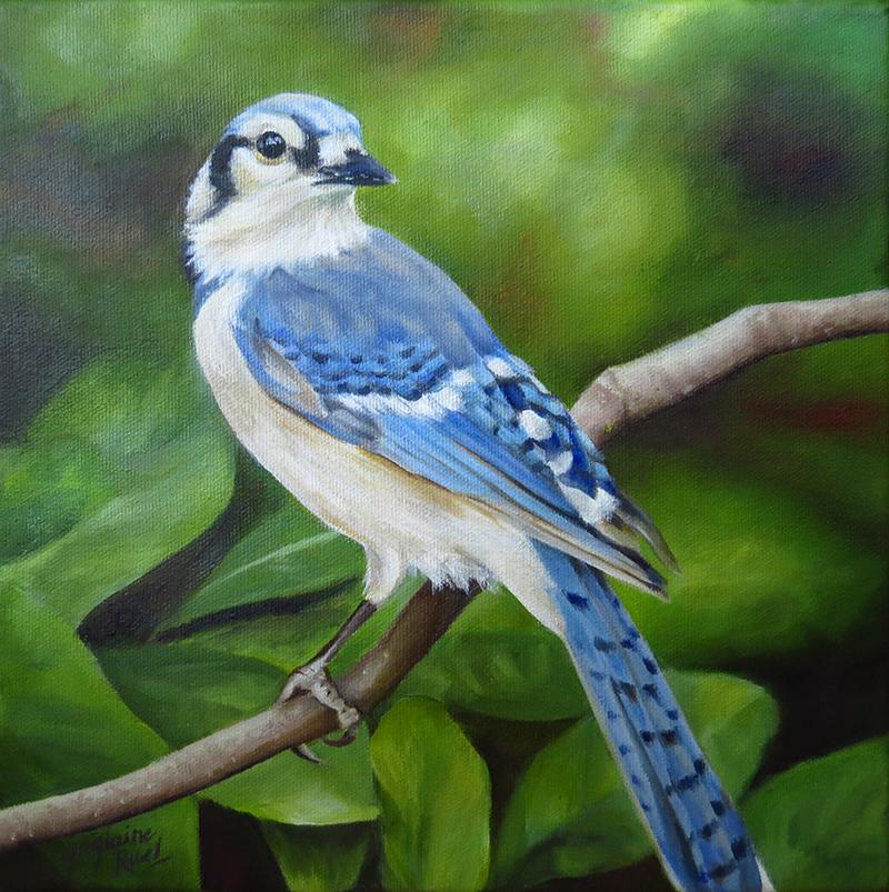 Le geai en attente - Artiste Peintre - Guylaine Ruel